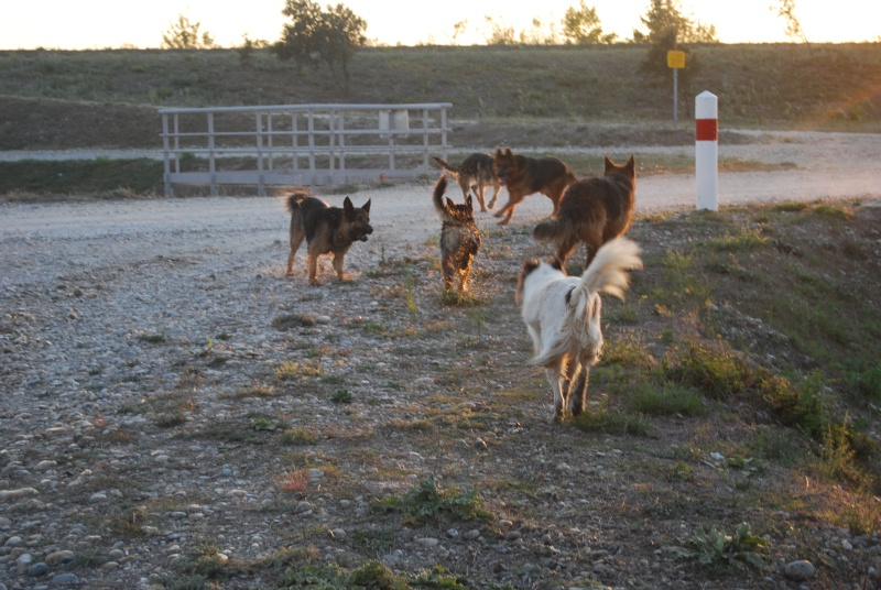 La vie des chiens au sein de l'association, c'est aussi ça... Ballad44
