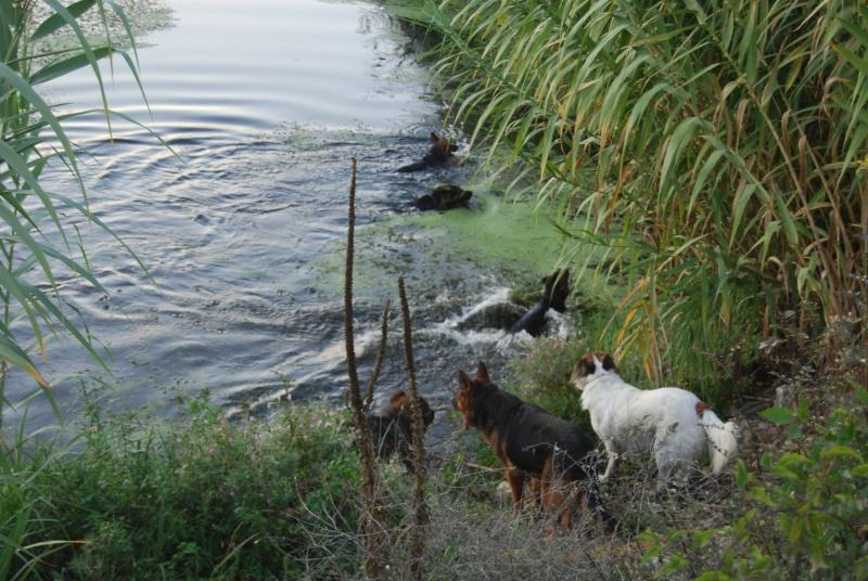 La vie des chiens au sein de l'association, c'est aussi ça... Ballad45