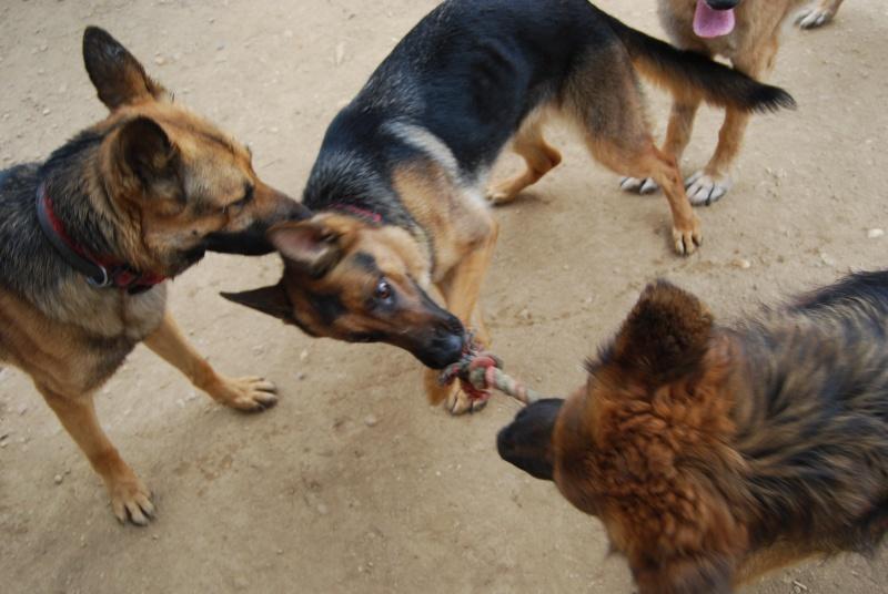 La vie des chiens au sein de l'association, c'est aussi ça... Dsc_0031