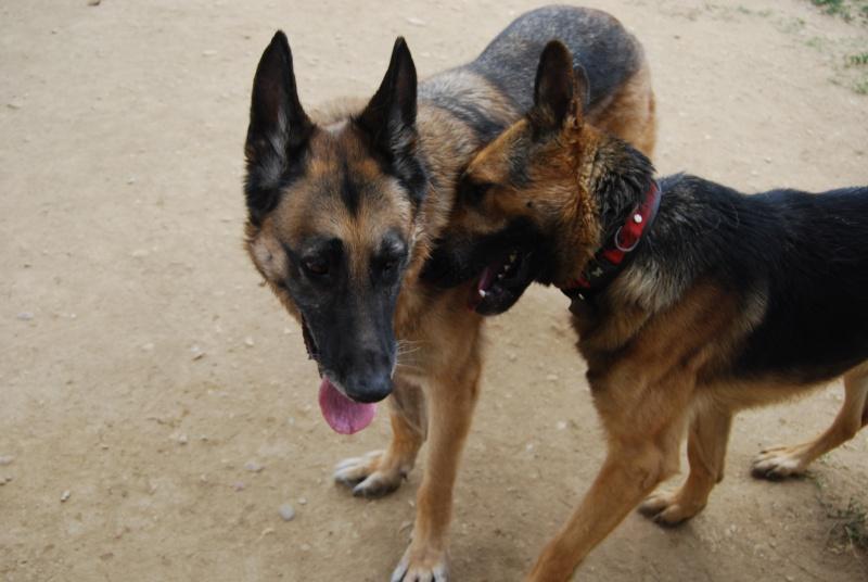 La vie des chiens au sein de l'association, c'est aussi ça... Dsc_0032