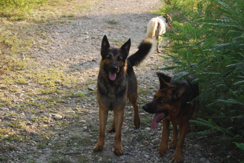 La vie des chiens au sein de l'association, c'est aussi ça... Dsc_0130