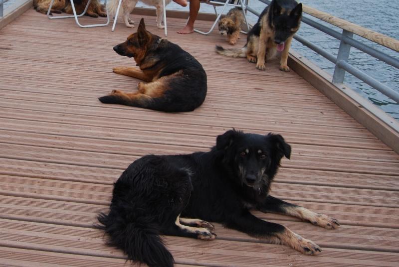 La vie des chiens au sein de l'association, c'est aussi ça... Dsc_0134