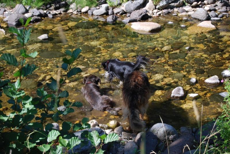 La vie des chiens au sein de l'association, c'est aussi ça... Dsc_0215