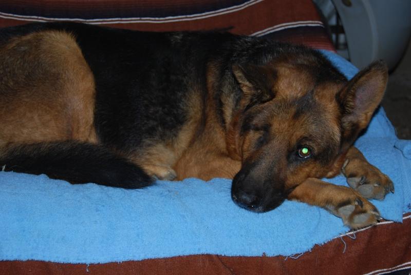 La vie des chiens au sein de l'association, c'est aussi ça... Dsc_0310
