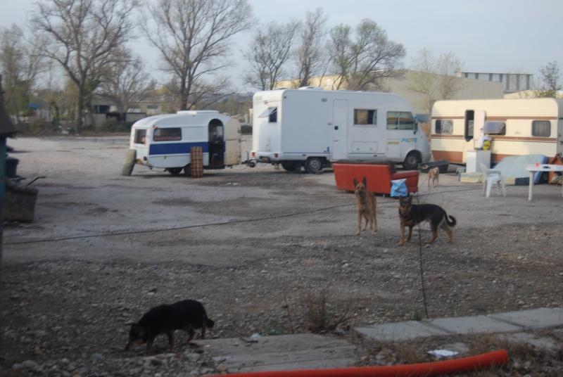 La vie des chiens au sein de l'association, c'est aussi ça... Dsc_0352