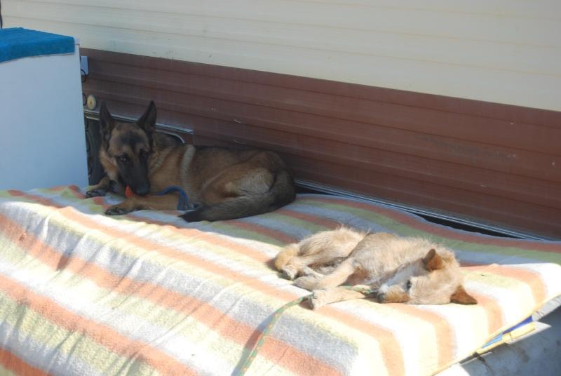 La vie des chiens au sein de l'association, c'est aussi ça... Dsc_0353
