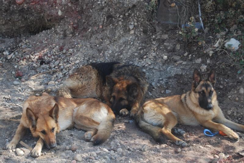 La vie des chiens au sein de l'association, c'est aussi ça... Dsc_0354