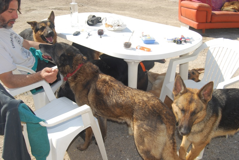 La vie des chiens au sein de l'association, c'est aussi ça... Dsc_0358