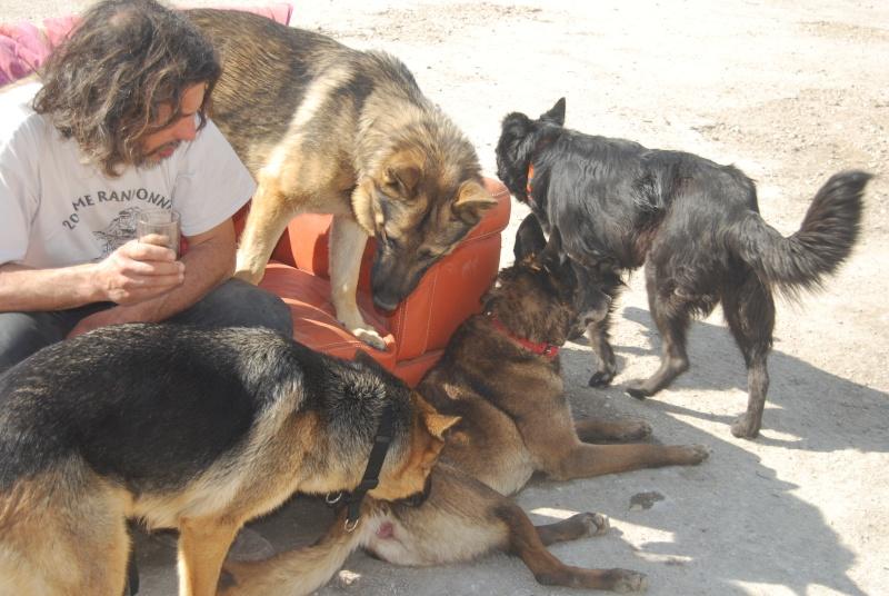 La vie des chiens au sein de l'association, c'est aussi ça... Dsc_0359