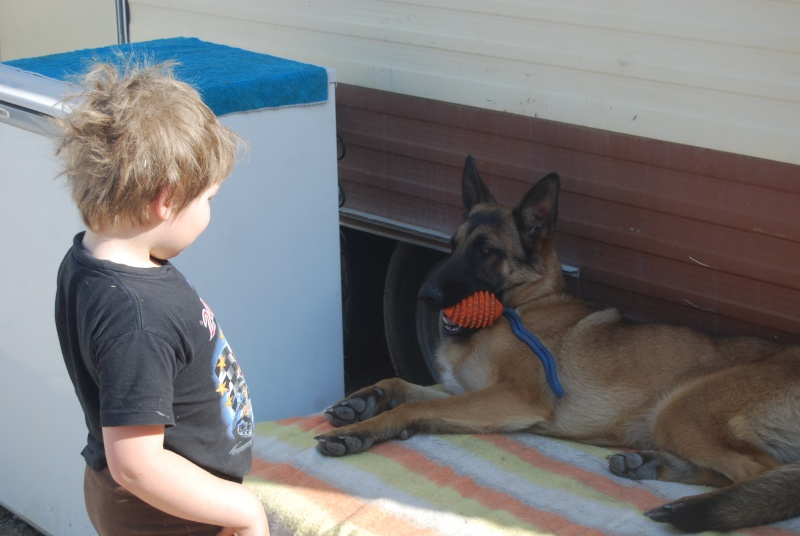 La vie des chiens au sein de l'association, c'est aussi ça... Dsc_0360