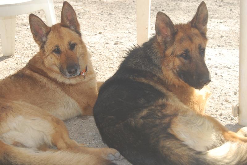 La vie des chiens au sein de l'association, c'est aussi ça... Dsc_0361
