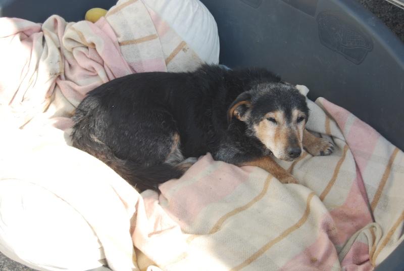 La vie des chiens au sein de l'association, c'est aussi ça... Dsc_0362