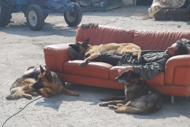 La vie des chiens au sein de l'association, c'est aussi ça... Dsc_0363
