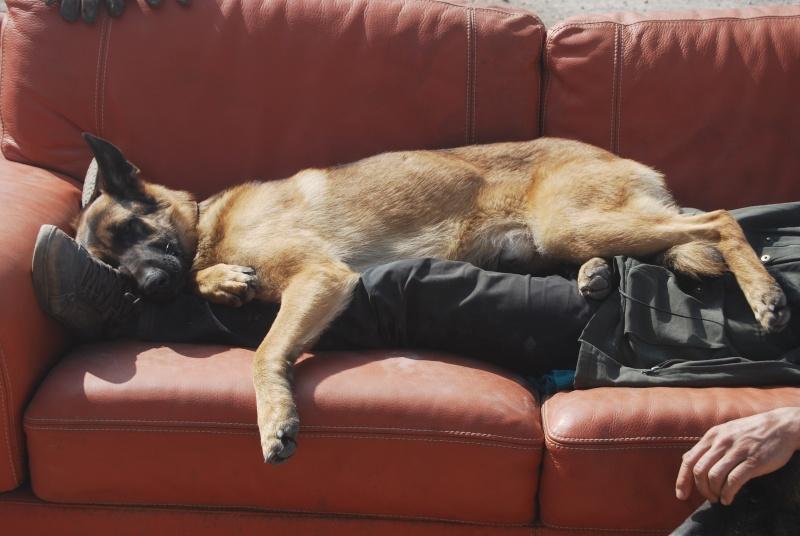 La vie des chiens au sein de l'association, c'est aussi ça... Dsc_0364