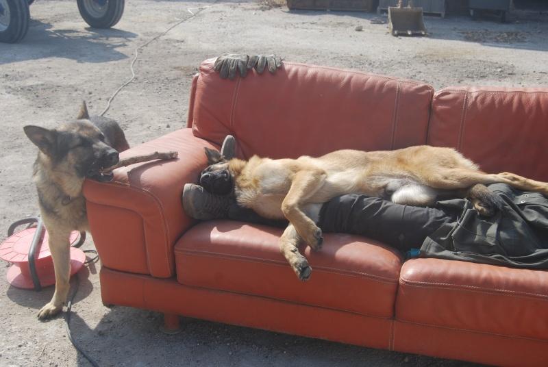 La vie des chiens au sein de l'association, c'est aussi ça... Dsc_0365