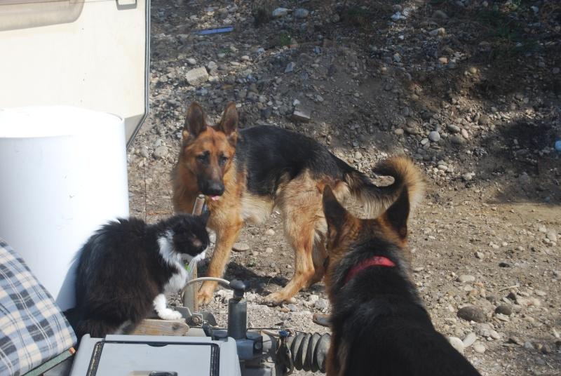 La vie des chiens au sein de l'association, c'est aussi ça... Dsc_0366