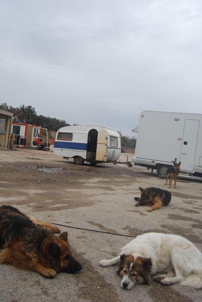 La vie des chiens au sein de l'association, c'est aussi ça... Dsc_0369
