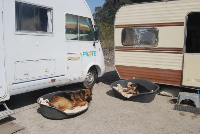 La vie des chiens au sein de l'association, c'est aussi ça... Dsc_0370
