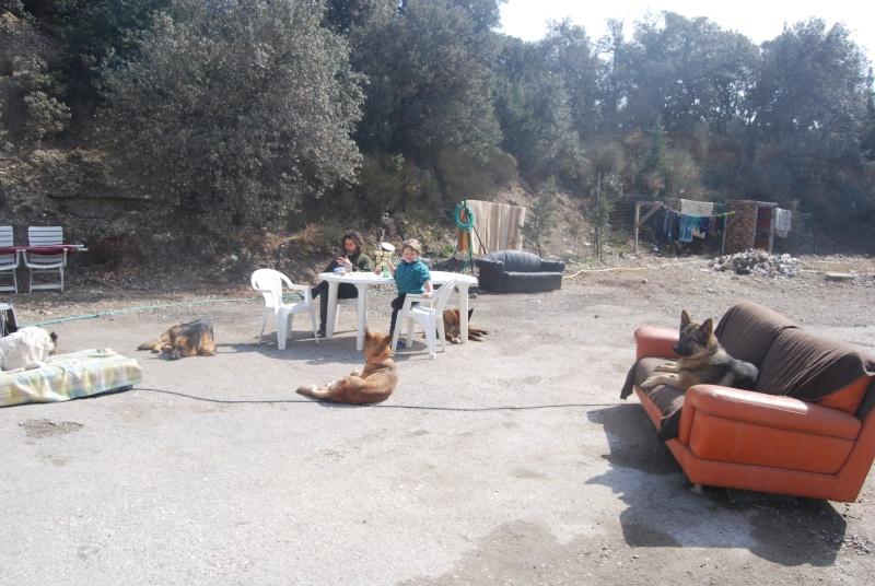 La vie des chiens au sein de l'association, c'est aussi ça... Dsc_0371