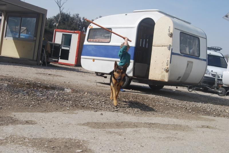 La vie des chiens au sein de l'association, c'est aussi ça... Dsc_0373