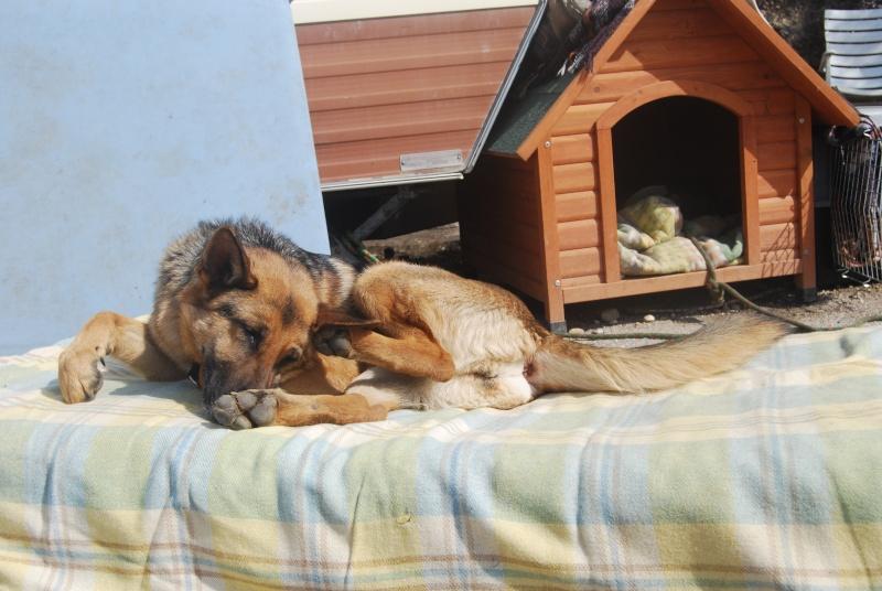La vie des chiens au sein de l'association, c'est aussi ça... Dsc_0378