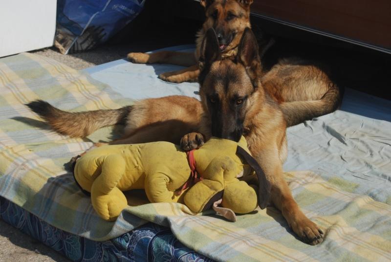 La vie des chiens au sein de l'association, c'est aussi ça... Dsc_0380