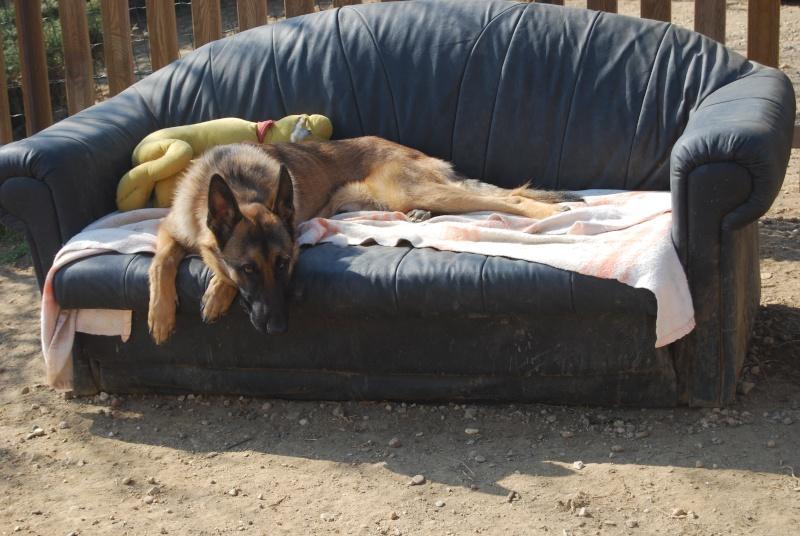 La vie des chiens au sein de l'association, c'est aussi ça... Dsc_0381