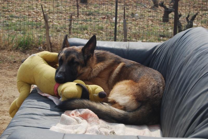 La vie des chiens au sein de l'association, c'est aussi ça... Dsc_0382