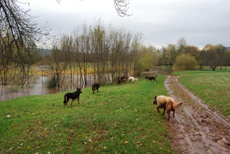 La vie des chiens au sein de l'association, c'est aussi ça... Dsc_0410