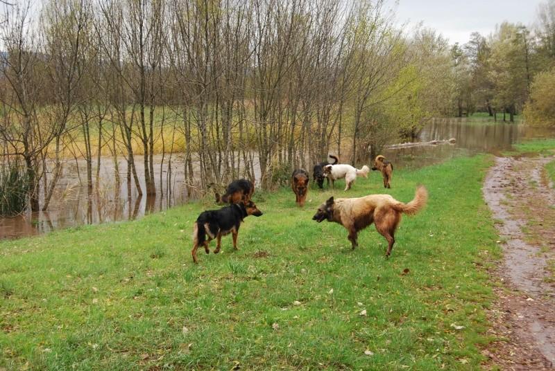 La vie des chiens au sein de l'association, c'est aussi ça... Dsc_0413