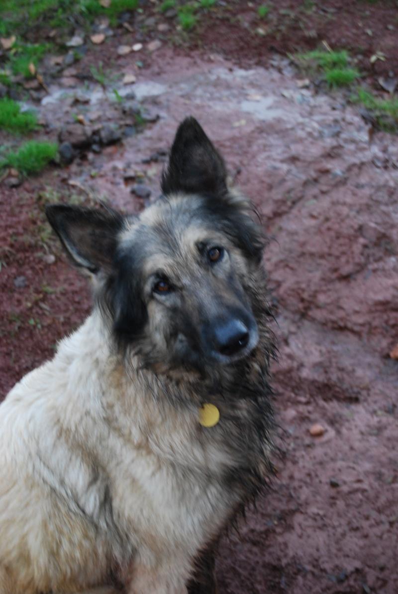 La vie des chiens au sein de l'association, c'est aussi ça... Dsc_0414
