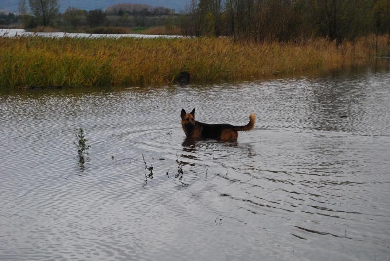La vie des chiens au sein de l'association, c'est aussi ça... Dsc_0415