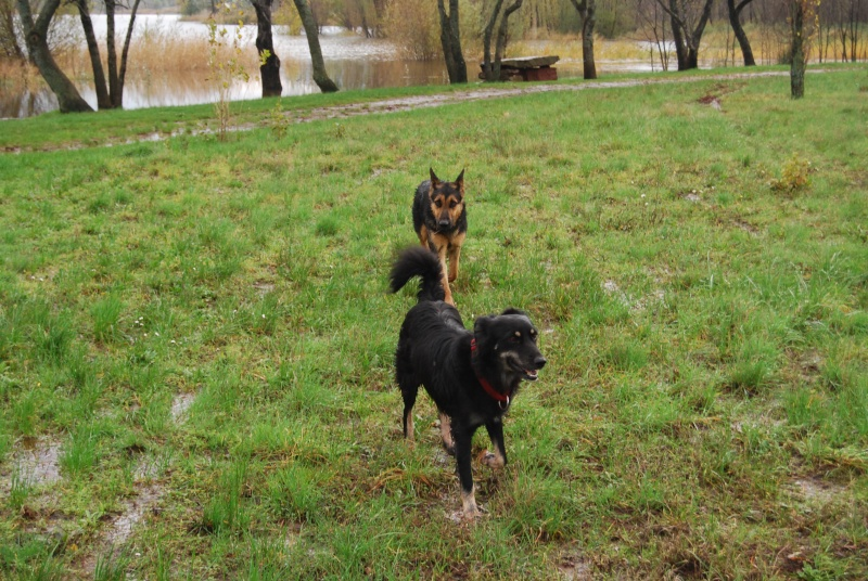 La vie des chiens au sein de l'association, c'est aussi ça... Dsc_0417