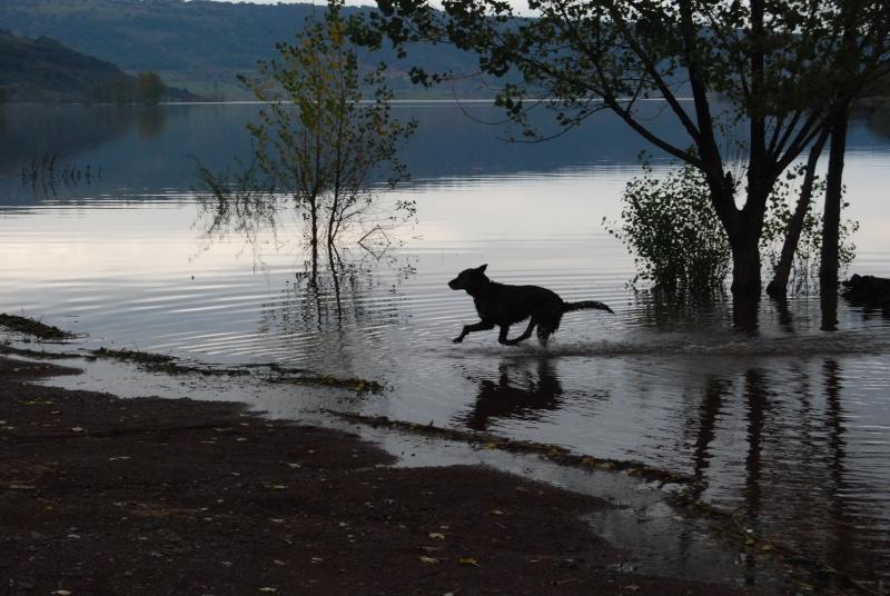 La vie des chiens au sein de l'association, c'est aussi ça... Dsc_0418
