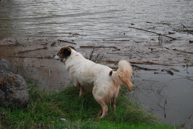La vie des chiens au sein de l'association, c'est aussi ça... Dsc_0419