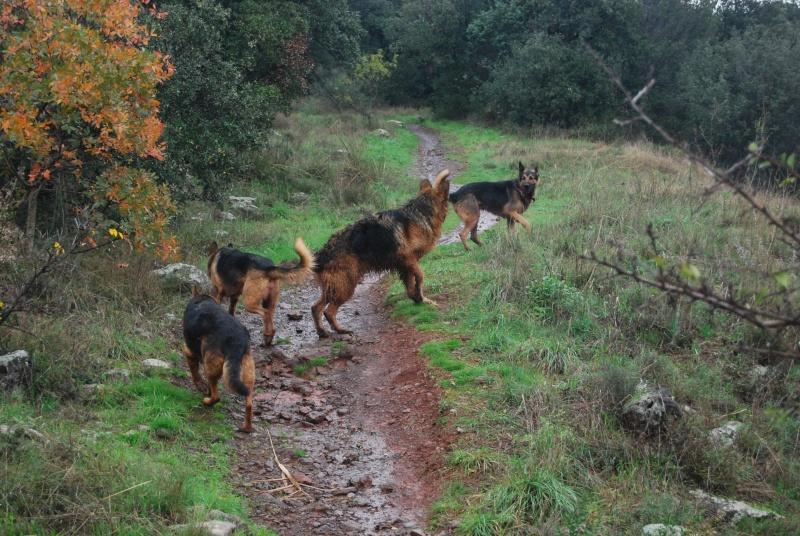 La vie des chiens au sein de l'association, c'est aussi ça... Dsc_0421