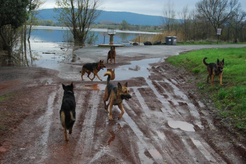 La vie des chiens au sein de l'association, c'est aussi ça... Dsc_0422