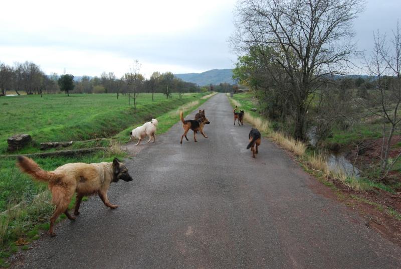 La vie des chiens au sein de l'association, c'est aussi ça... Dsc_0423