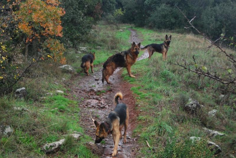 La vie des chiens au sein de l'association, c'est aussi ça... Dsc_0425