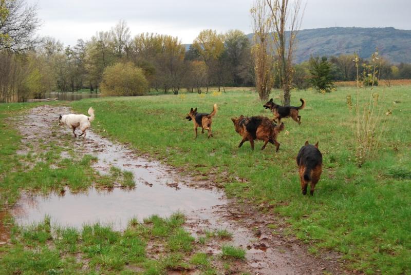 La vie des chiens au sein de l'association, c'est aussi ça... Dsc_0426