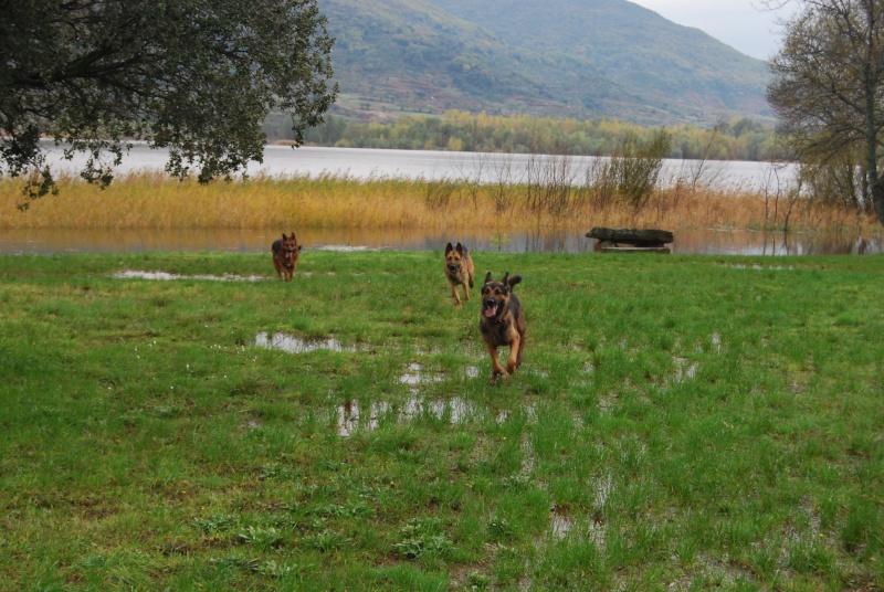 La vie des chiens au sein de l'association, c'est aussi ça... Dsc_0427