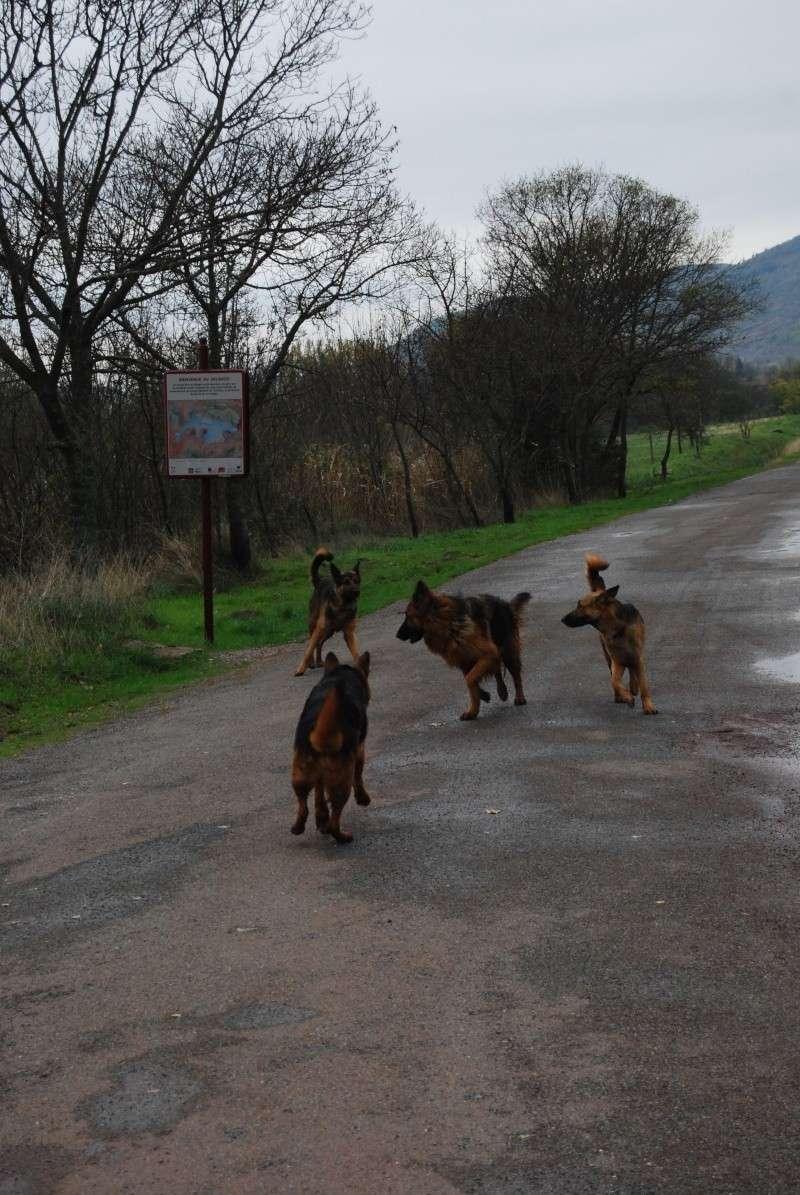 La vie des chiens au sein de l'association, c'est aussi ça... Dsc_0428