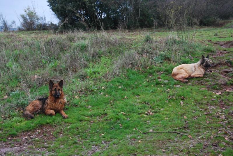 La vie des chiens au sein de l'association, c'est aussi ça... Dsc_0429