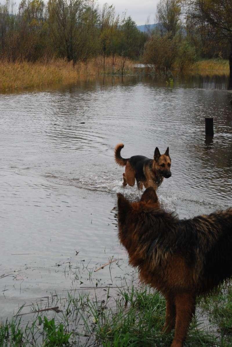 La vie des chiens au sein de l'association, c'est aussi ça... Dsc_0430