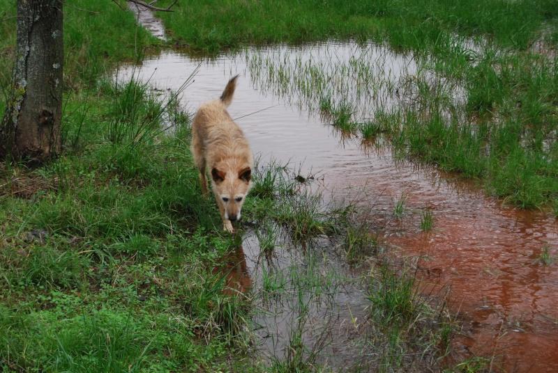 La vie des chiens au sein de l'association, c'est aussi ça... Dsc_0431