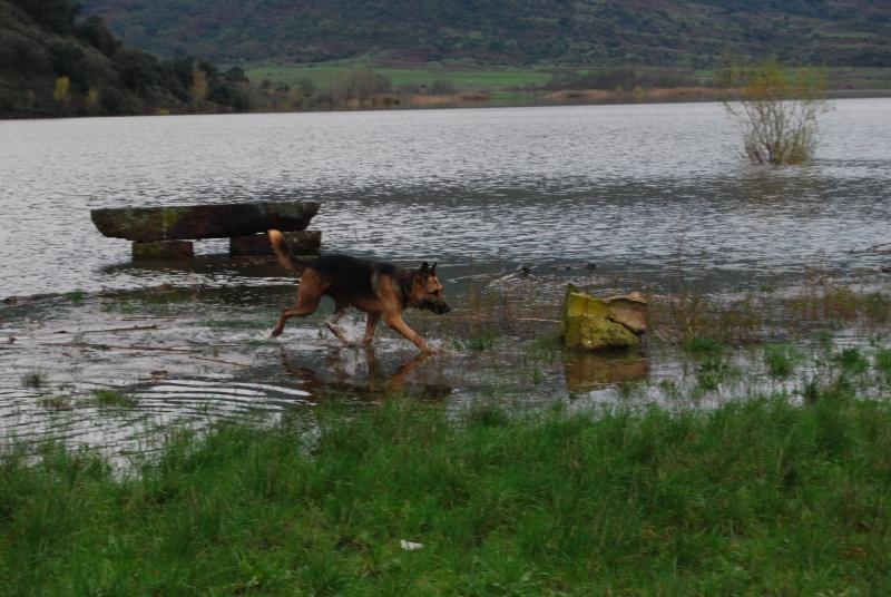 La vie des chiens au sein de l'association, c'est aussi ça... Dsc_0432