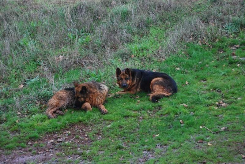 La vie des chiens au sein de l'association, c'est aussi ça... Dsc_0434