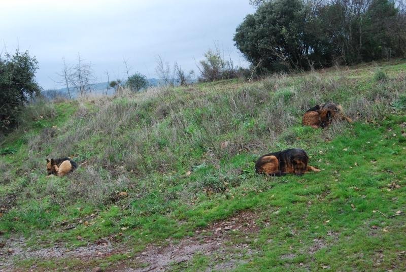 La vie des chiens au sein de l'association, c'est aussi ça... Dsc_0435