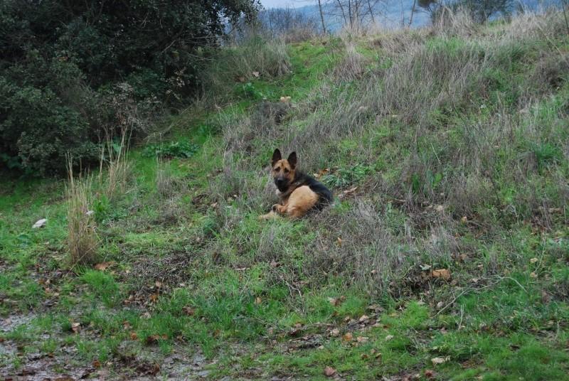 La vie des chiens au sein de l'association, c'est aussi ça... Dsc_0437