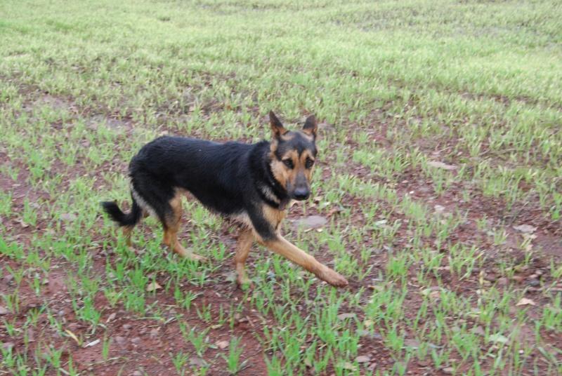 La vie des chiens au sein de l'association, c'est aussi ça... Dsc_0510